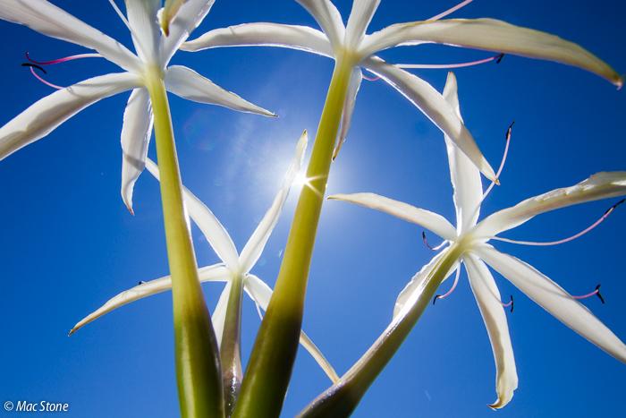 MacStone_Florida_Everglades-3000.jpg