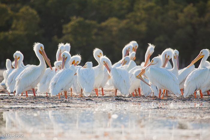 MacStone_Florida_Everglades-3096.jpg