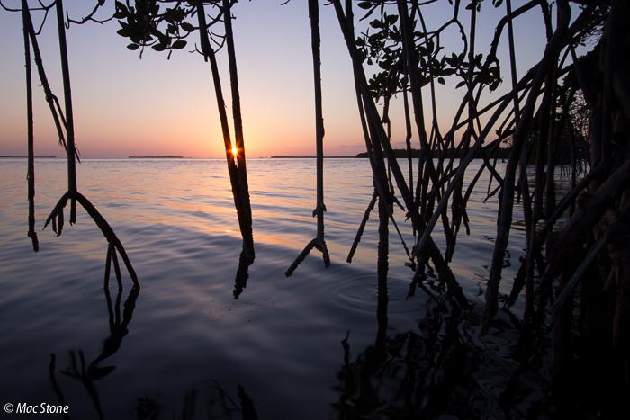MacStone_Florida_Everglades-0005.jpg
