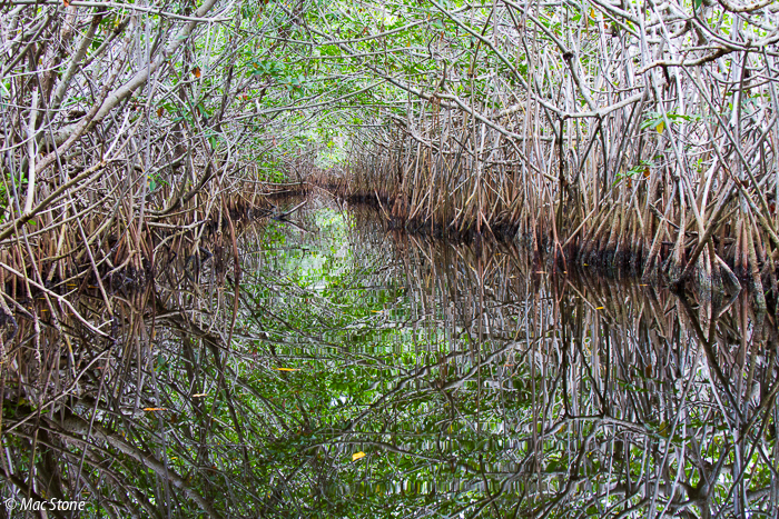 MacStone_Florida_Everglades-2649.jpg