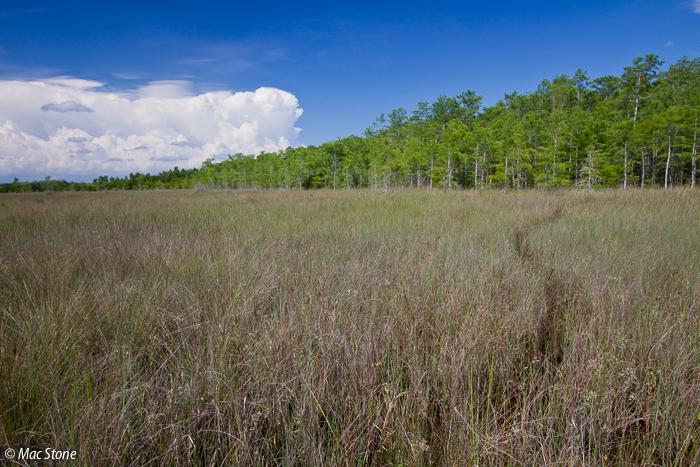 MacStone_Florida_Everglades-3029.jpg
