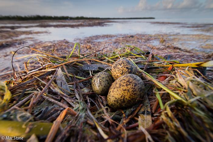 MacStone_Florida_Everglades-3422.jpg
