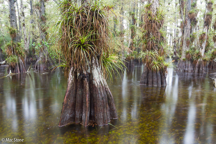 MacStone_Florida_Everglades-2930.jpg