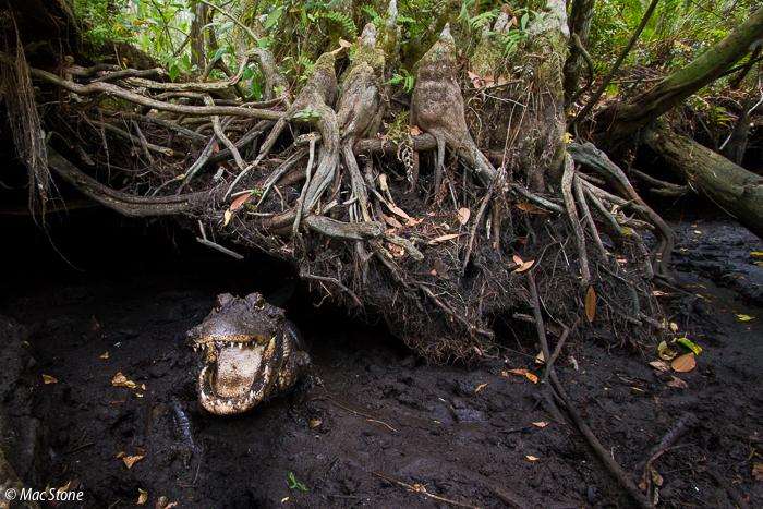 MacStone_Florida_Everglades-4195.jpg