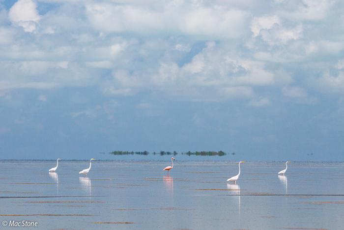 MacStone_Florida_Everglades-4266.jpg