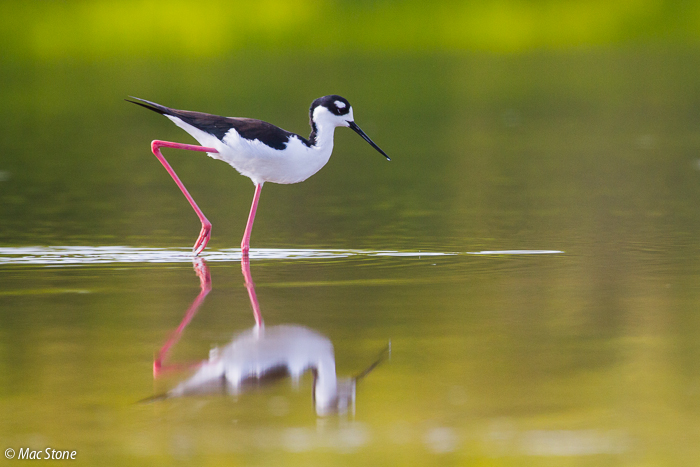 MacStone_Florida_Everglades-6691.jpg