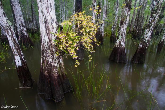 MacStone_Florida_Everglades-9527.jpg