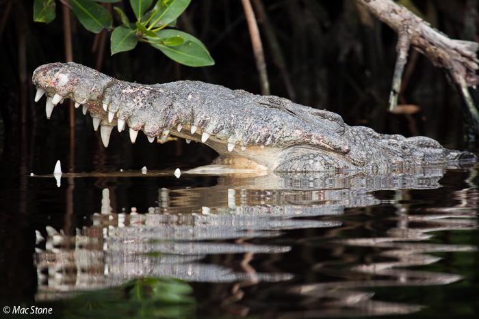 MacStone_Florida_Everglades-0289.jpg