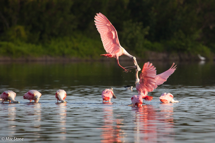 MacStone_Florida_Everglades-1589.jpg