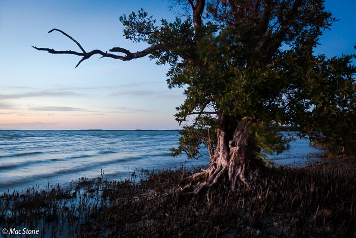 MacStone_Florida_Everglades-2035.jpg