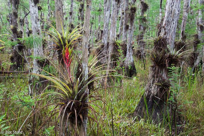 MacStone_Florida_Everglades-3381.jpg