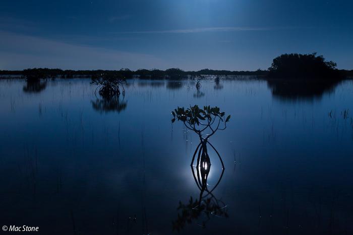 MacStone_Florida_Everglades-3410.jpg