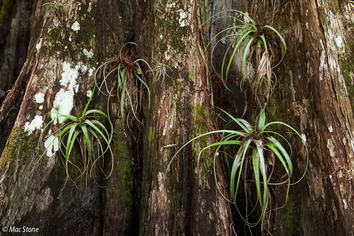 MacStone_Florida_Everglades-3550.jpg