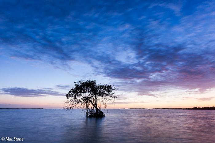 MacStone_Florida_Everglades-3577.jpg