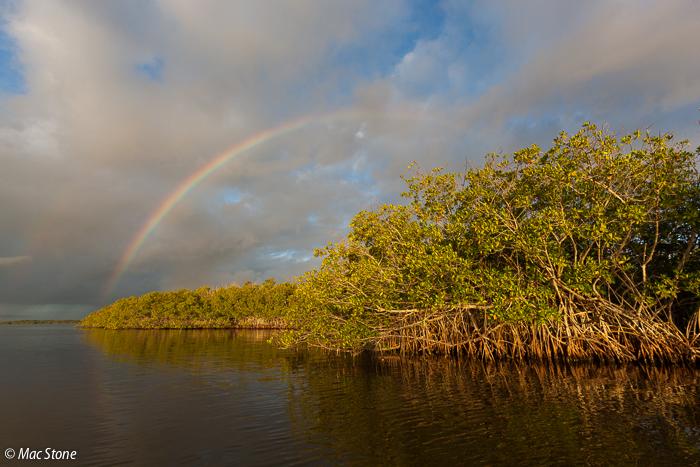 MacStone_Florida_Everglades-5321.jpg