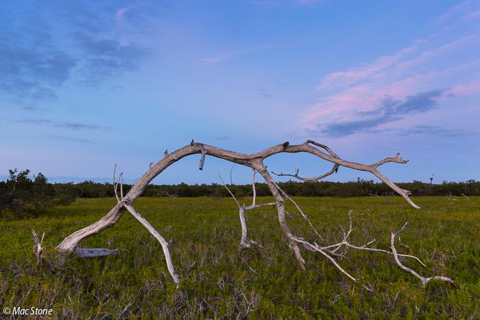 MacStone_Florida_Everglades-7449.jpg
