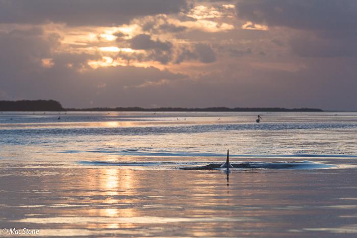 MacStone_Florida_Everglades-7882.jpg