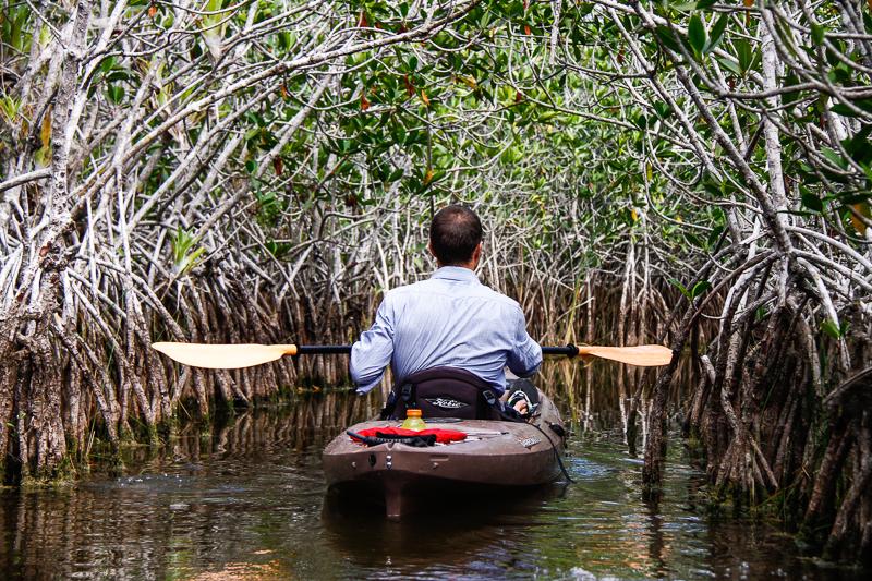 MacStone_Florida_Everglades-1993.jpg