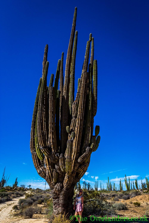 Mexico09.jpg