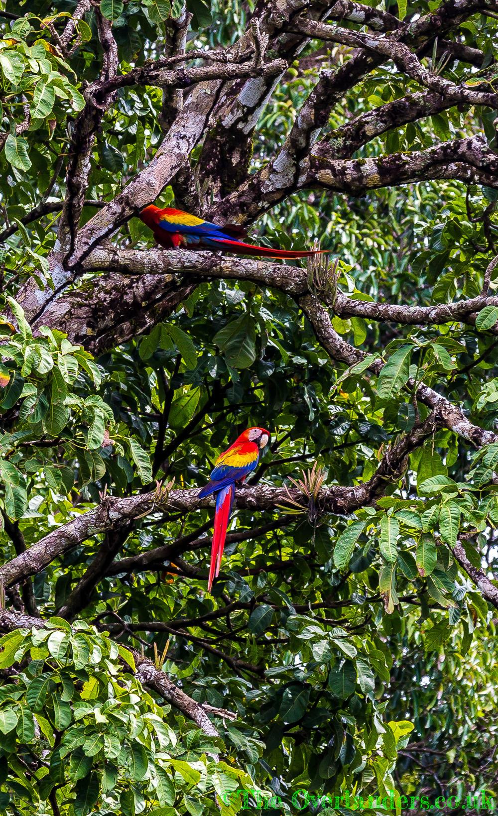 Belize-53.jpg