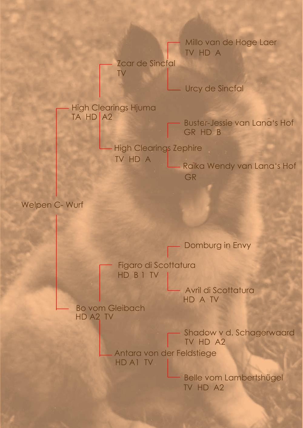 Stammbaum Welpen C-Wurf
