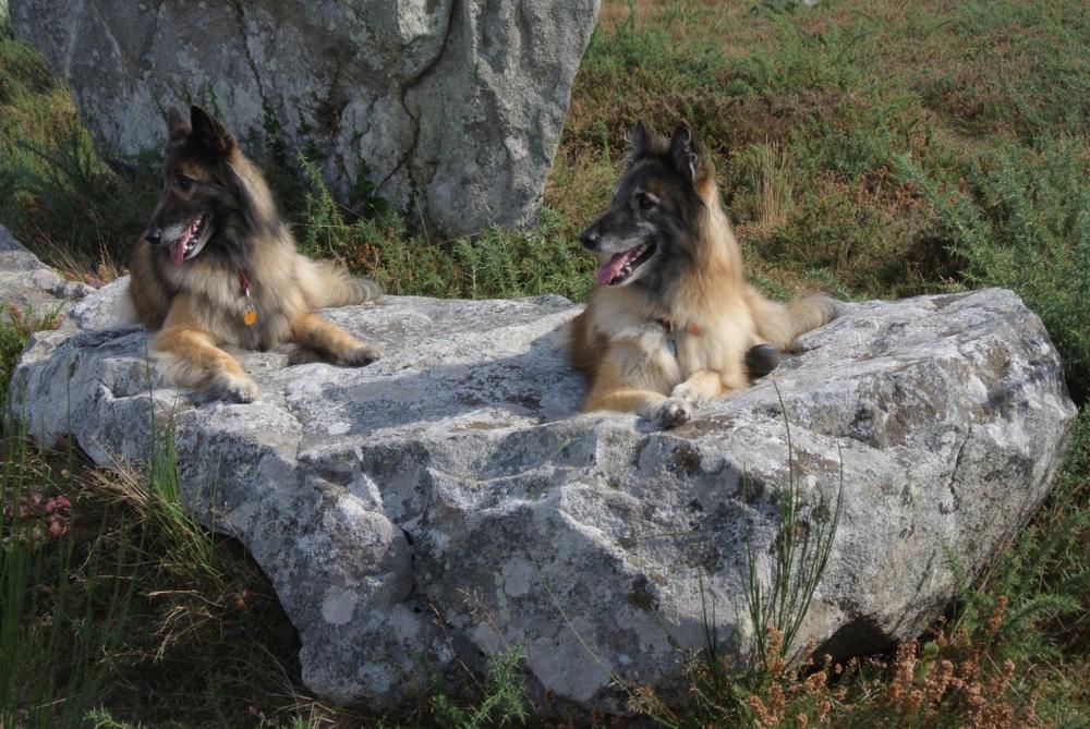 Hunde in Carnac.jpg