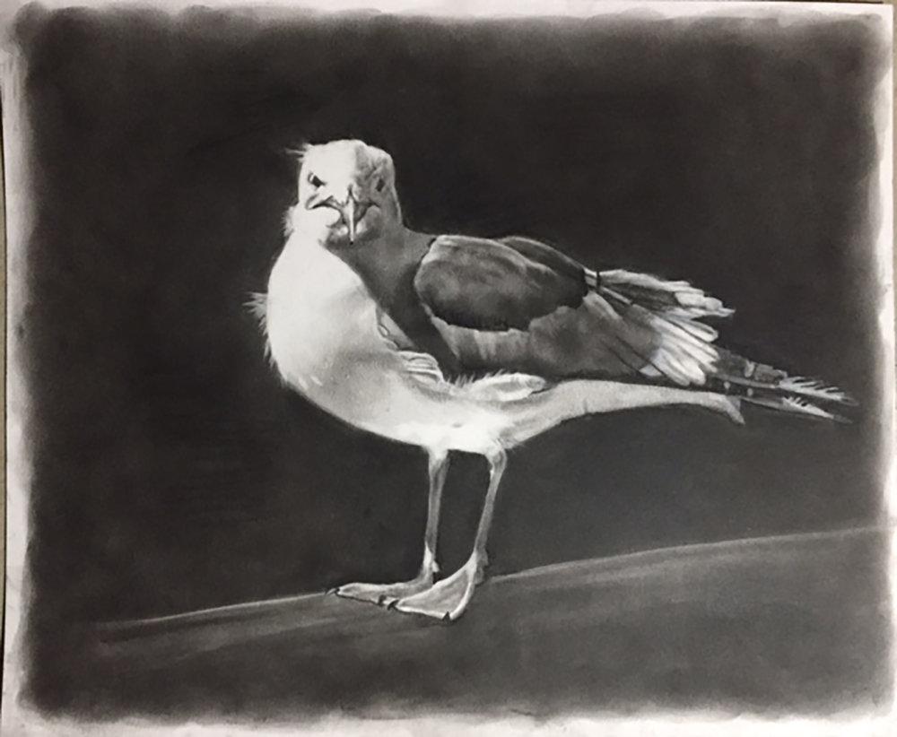 Morrow Bay Bird.jpg