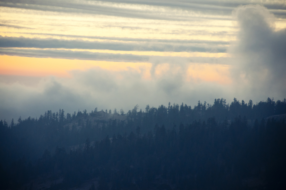 sequoia32.jpg