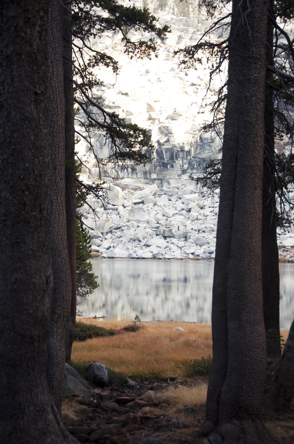 sequoia24.jpg