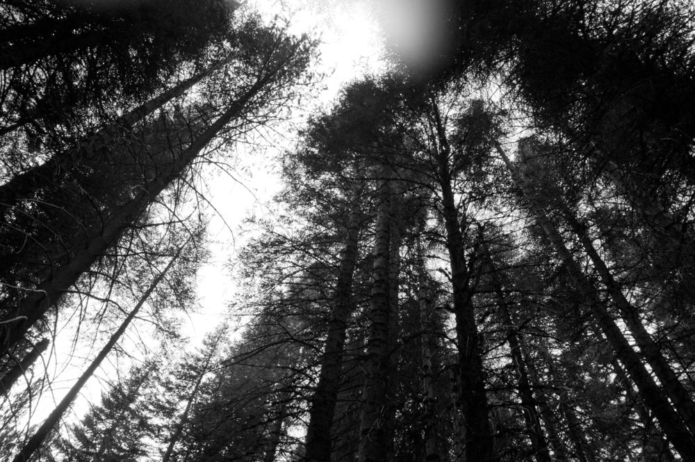 sequoia52.jpg