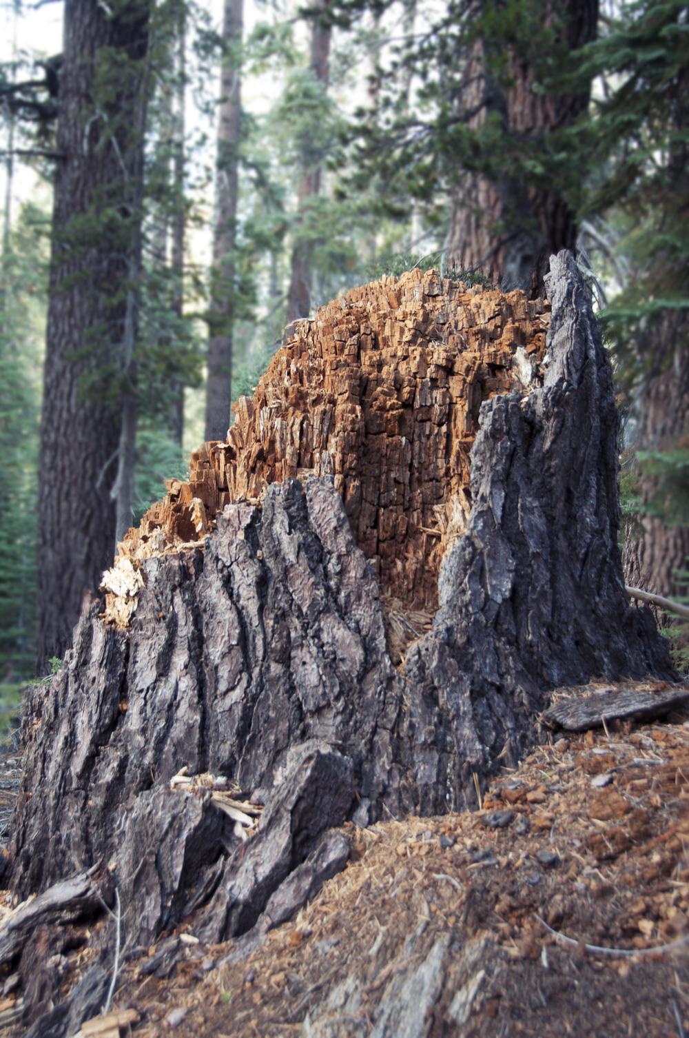 sequoia21.jpg