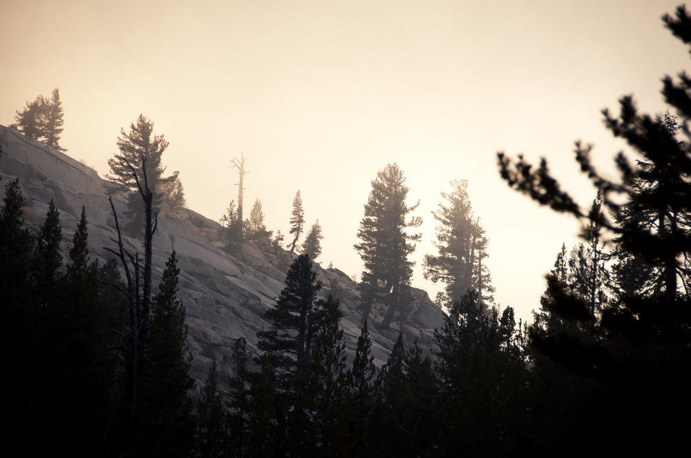 sequoia28.jpg