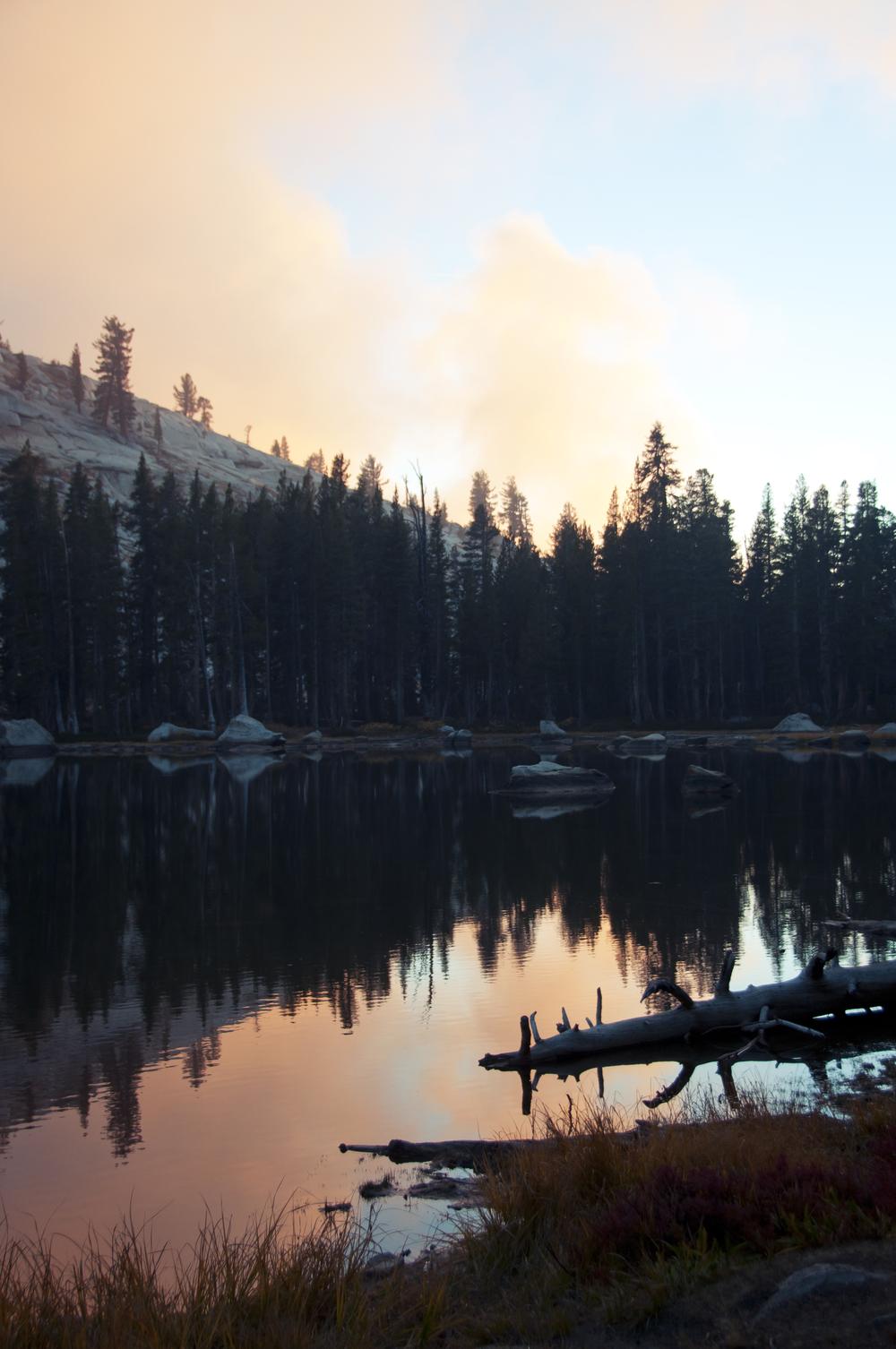 sequoia30.jpg