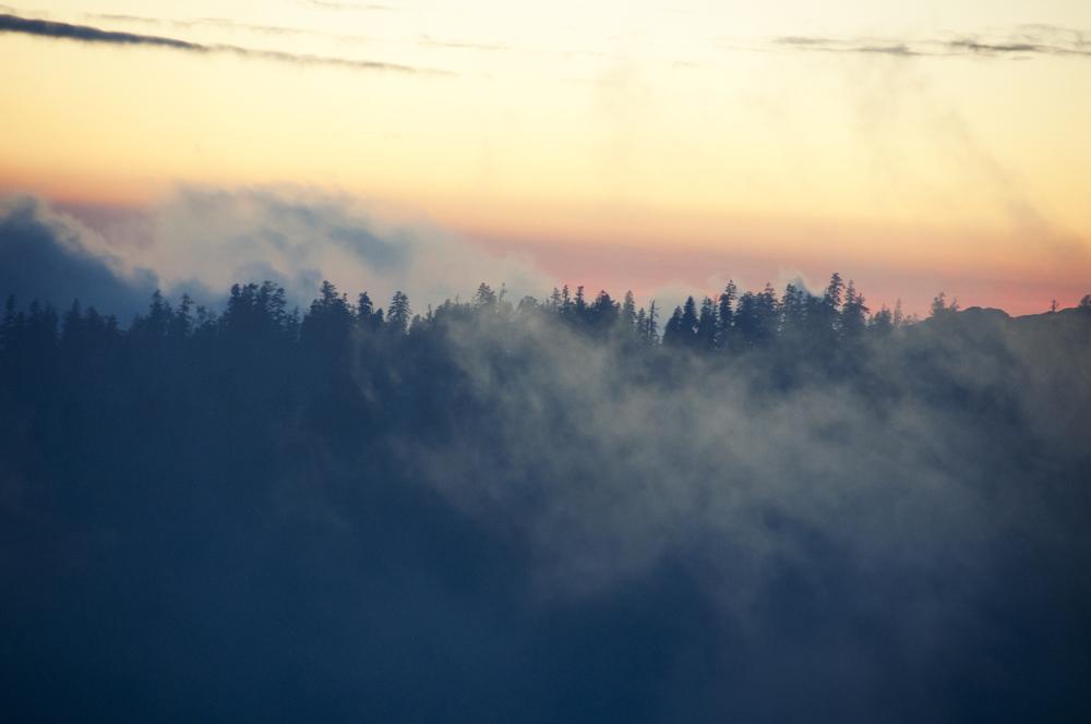 sequoia34.jpg