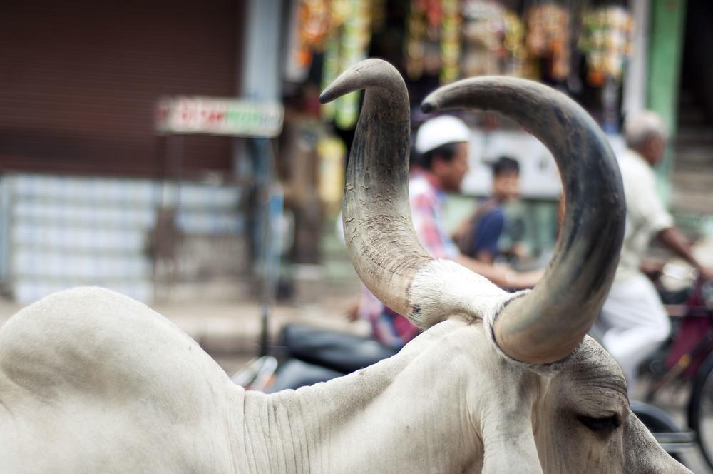 AhmedabadDayFive091.jpg