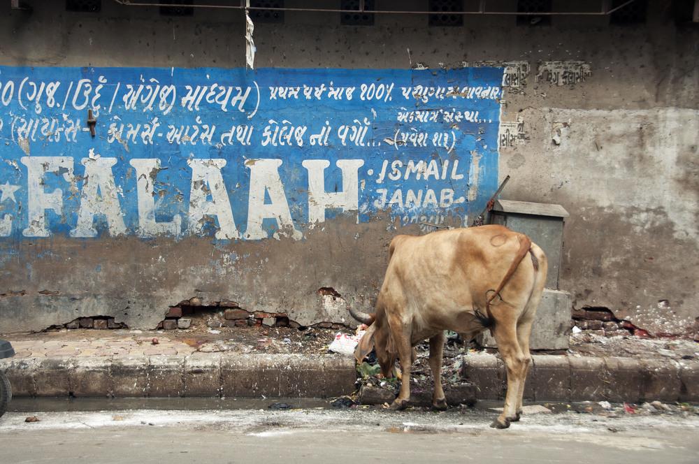 AhmedabadDayOne011.jpg