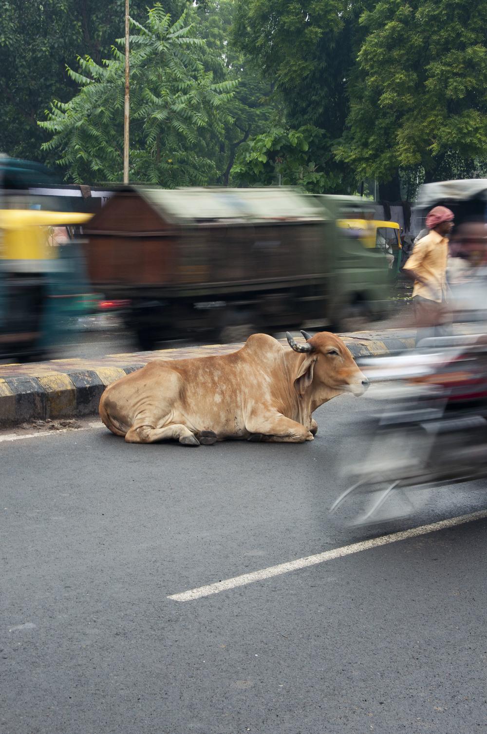 AhmedabadDayTwo161.jpg