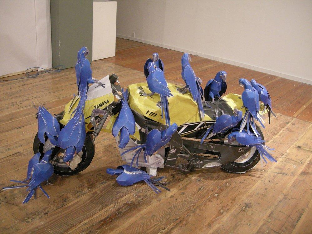yamaha macaw.jpg