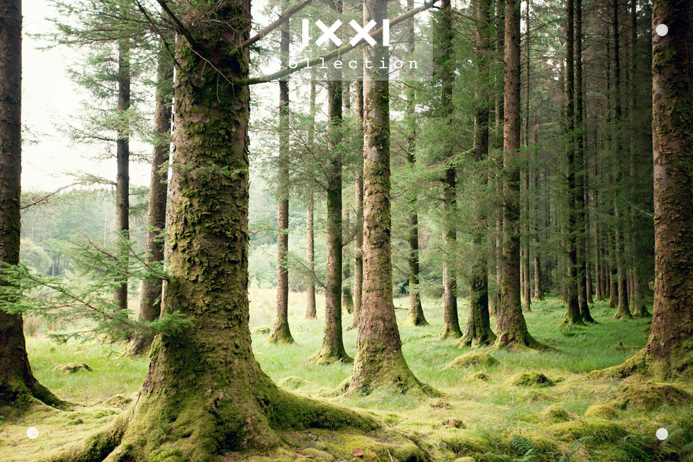 IXXI collection | Forest