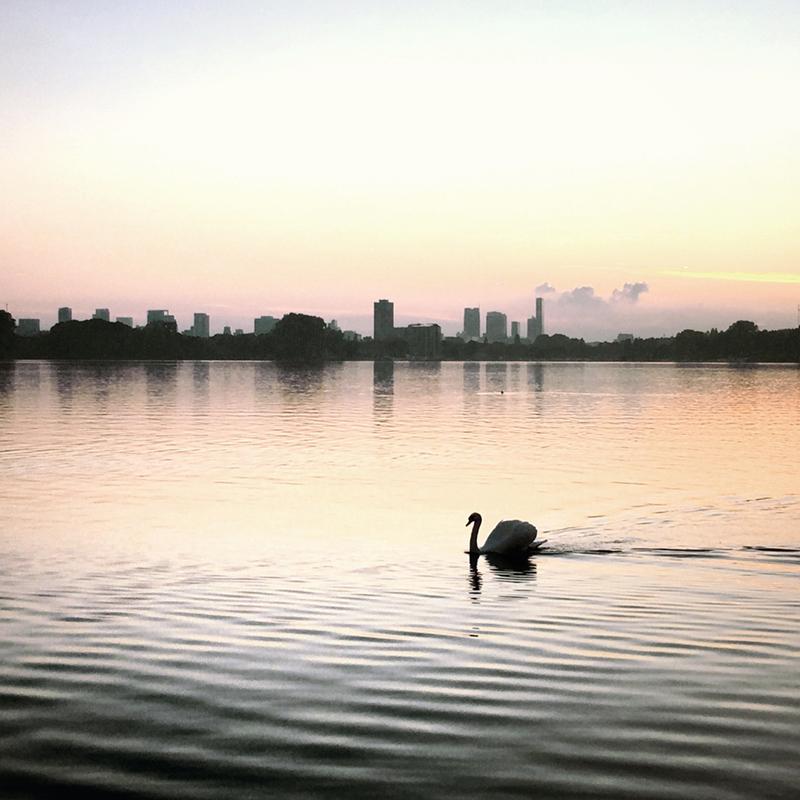 Instagram   Smooth swimming sunshine swan