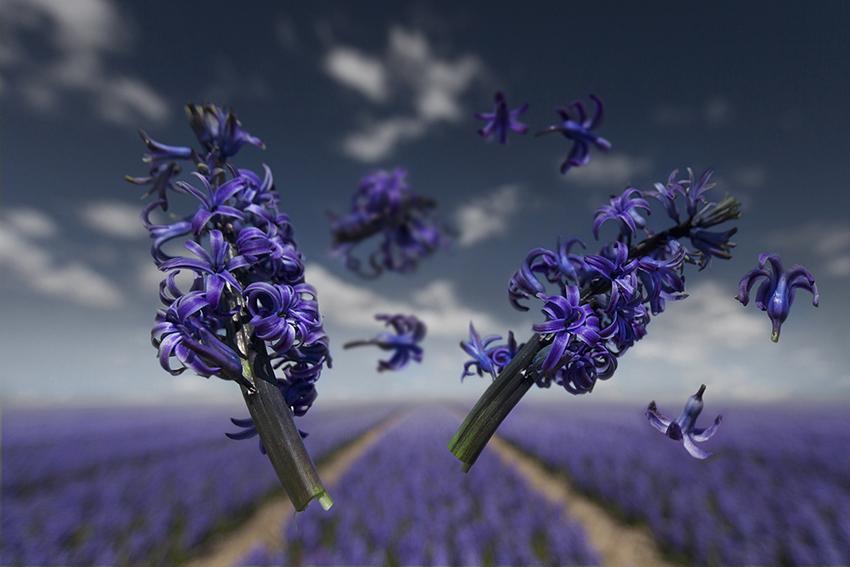 Gravity | Flower Power - Orientalis(from $300)