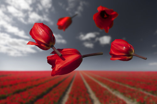 Flower_Power_Lalibela_ClaireDroppert.jpg