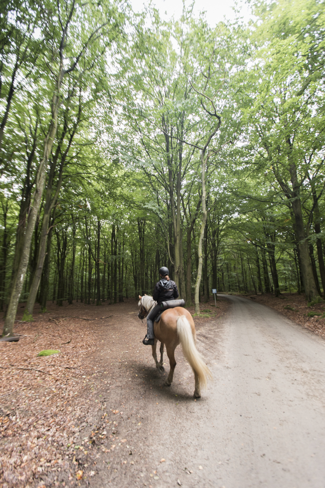 Claireonline_blog_sweden_Skane_soderasen_horseriding.jpg