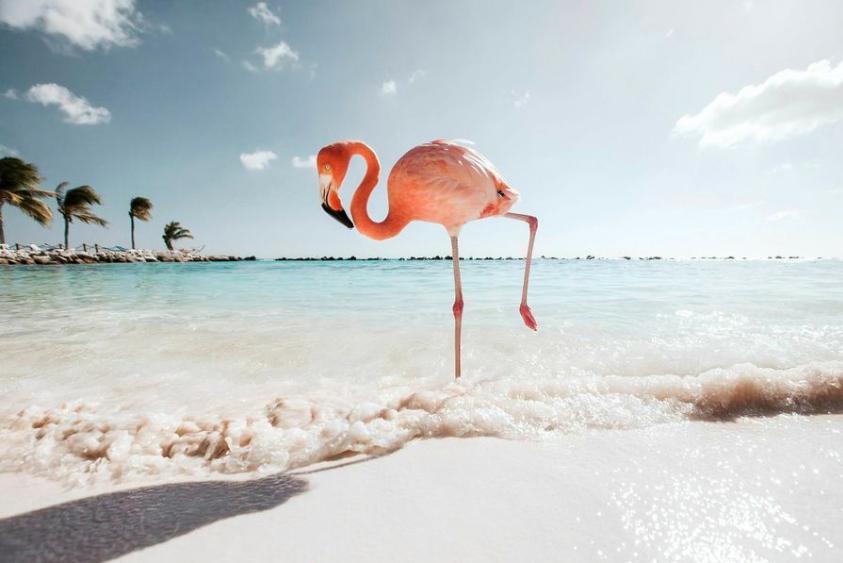 In Position (Aruba)