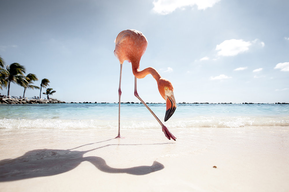 Flamingo Friday