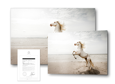 fineartprints-clairedroppert-emotions.png