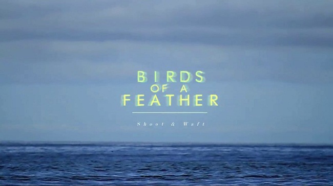 Birds-of-a-Feather_1.jpg