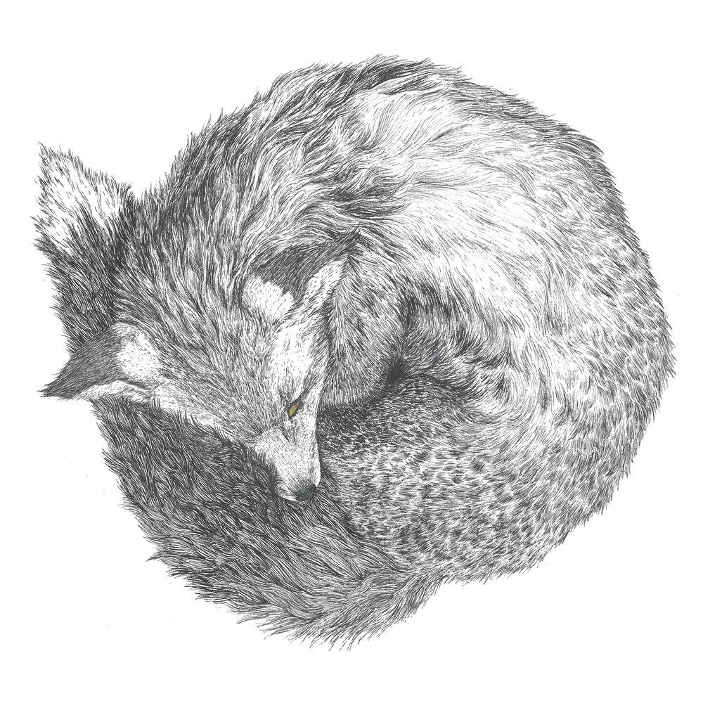 fox_ee.jpg