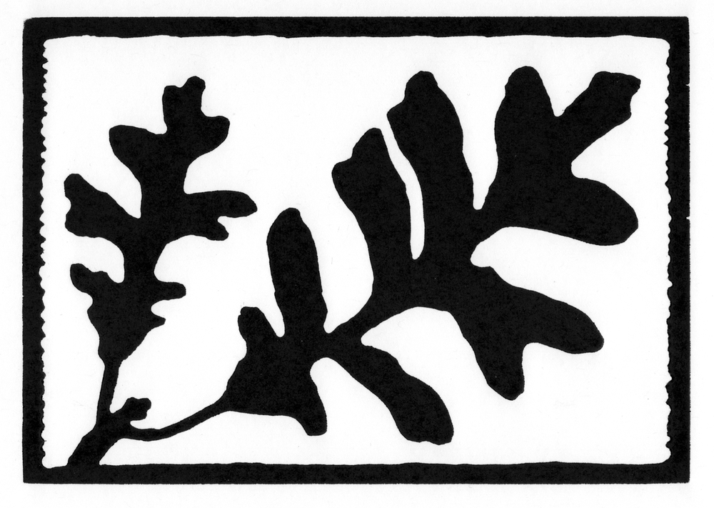 Bur Oak Leaves  •  © Fred Montague $48  •  image 8 x 5.5  •  mat 14 x 12 Edition size: 88  •  status: available