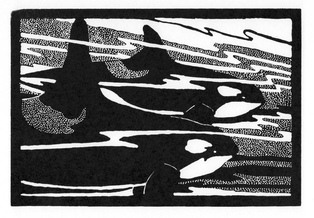 Orcas  •  © Fred Montague $48  •  image 8 x 5.5  •  mat 14 x 12 Edition size: 88  •  status: available